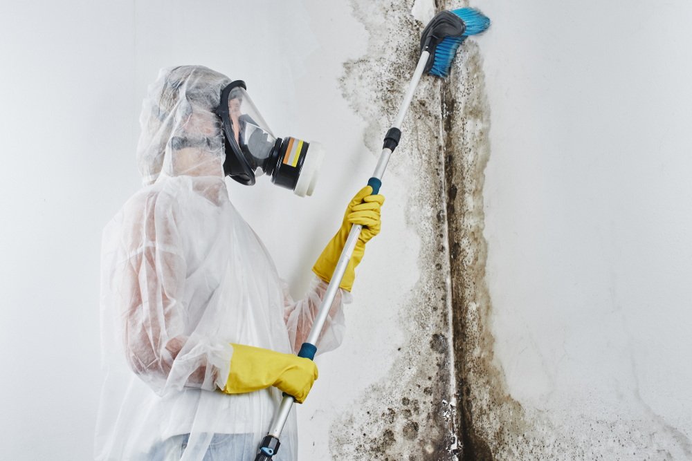 common black mold misconceptions